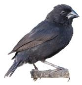 Darwin Finch Activity